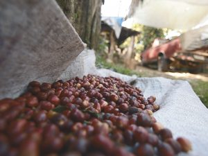 la-importancia-contar-buenos-proveedores-cafe-grano