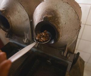principales-variedades-de-cafe-que-existen-en-el-mundo
