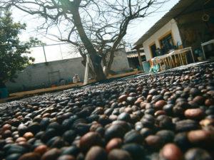 convertirse-exitosos-distribuidores-cafe-mexico